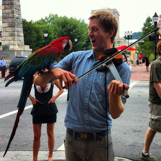 parrot-on-violin-bowing-hand